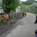 Koně míří navečer domů