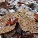 Podzim v detailu