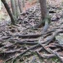 Stromy svádějí boj o udržení se na skalách