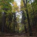 Bukovým lesem na konci Suché Belé
