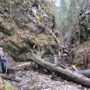 Dno rokliny je zavaleno dřevem