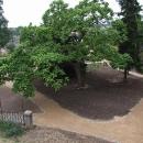 Zámecký park se dočkal nových úprav