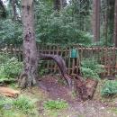 Tvary stromů v Boubínském pralese