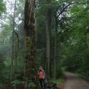 Pralesní torzo stromu