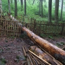 V pralese když strom padne, zůstává na místě a i plot se musí přizpůsobit