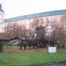 Kamenice nad Lipou a nejstarší česká lípa. Už se stmívá.