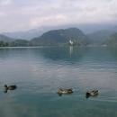 Bledské jezero s kostelíkem na ostrůvku