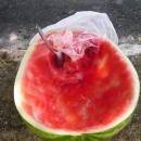 Předražený meloun v Medulinu