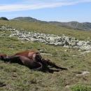 Nedaleko leží kůň. Jdu na průzkum. Shora vypadal, že spí. Pohled z druhé strany mě vyděsil. Kdo to mohl udělat?