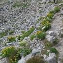 Cesta lemovaná květinami