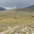 Alpina to má vymakaný do posledního detailu - v cestě volně se pasoucí koně :-)