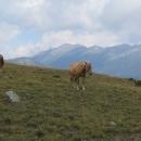 Koníci na hřebeni