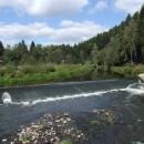 Řeka Jihlava v Přímělkově