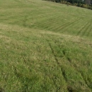 Jdeme cestou necestou - naše stopy v trávě :-)