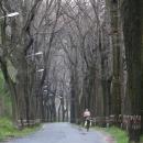 Jízda alejí stromů a lamp