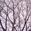 Detail zmrzlého stromu