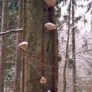 Strom s choroši v zimě