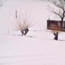 Zajímavé vrbičky vyrostly poblíž Pastvinské přehrady