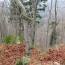Cestou do Nýdku navštěvujeme v lese místo, kde kázal jakýsi kazatel