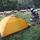 Ráno se kolem přehnalo stádo ovcí