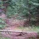 Překvapení cestou od pramene. Doufám, že se medvěd pohybuje zrovna někde jinde :-)