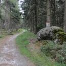 Tato stezka přímo po hranici cyklo není a je při tom mnohem lépe sjízdná!