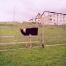 za ohradou pobíhá zajímavý dobytek :-)