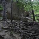 Stromy musí vytvořit splet kořenů, aby se udržely