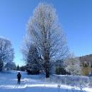 Mráz čaruje v nižších polohách, výše jsou lesy bez sněhu