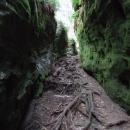 Kořeny se plazí do nitra maštalí