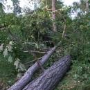 Pohroma po nedávné bouřce, nejde skoro projít