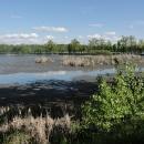 Některé rybníky jsou vypuštěné