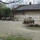 Nosorožci mají, jako skoro všichni domácí mazličci, rádi drbání (od zaměstnanců)