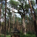 Noříme se do nitra lesa k Žilkovu dubu