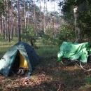 Ložnice v ranním lese