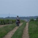 Přes vinohrady