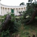 U Tří Grácií je i nejmučenější strom, zkřiven za mlada sněhem, hojně oblézán návštěvníky v jeho dospělém věku, dnes jako trvalý invalida chráněn