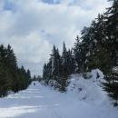 Sněhu je spousta, hlavně na straně kopce odvrácené od slunce je sníh i na stromech.