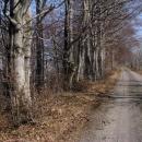 Výjezd z lesa