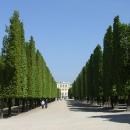 Rovný sestřih stromů