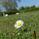 Jaro se hlásí o slovo