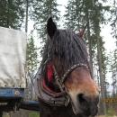 Koník (taky fotil Víťa)