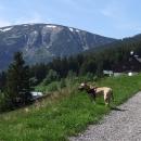 Druhý den nás na výletě na louky nad Pecí doprovází Pallas