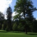 Kouzlo anglických parků, připadáte si jak v lese