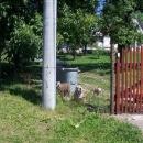 Že se na člověka občas seběhnou psi (jeden, dva ...) za plotem, to je normálka. Ale tady jich bylo nepočítaně!