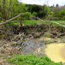 To není bordel v řece, ale výsledek práce bobra