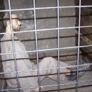Odsouzení na doživotí nebo čekající na trest smrti seděli ve speciálních celách