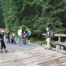 Vystupujeme na zastávce Popradské pleso a jdeme s davem po asfaltu. Po asi kilometru překonáváme mostek přes potok a obdivujeme drsné tatranské borce, resp. jejich fotogenické pozice