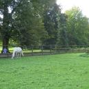 Obora u slatiňanského zámku. Zdejší zámek je vyhlášený chovem koní, v jeho okolí a hřebčínech se natáčely nějaké pohádky, seriály a tak.