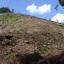Škoda, že po těžbě dřeva, způsobené možná následky vichřice, jsou kolem často holiny
